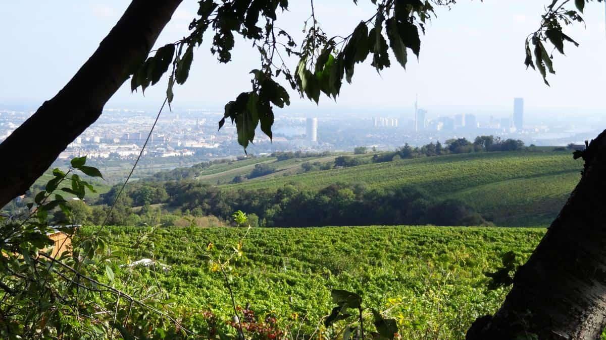 Aussicht vom Weingut Wailand