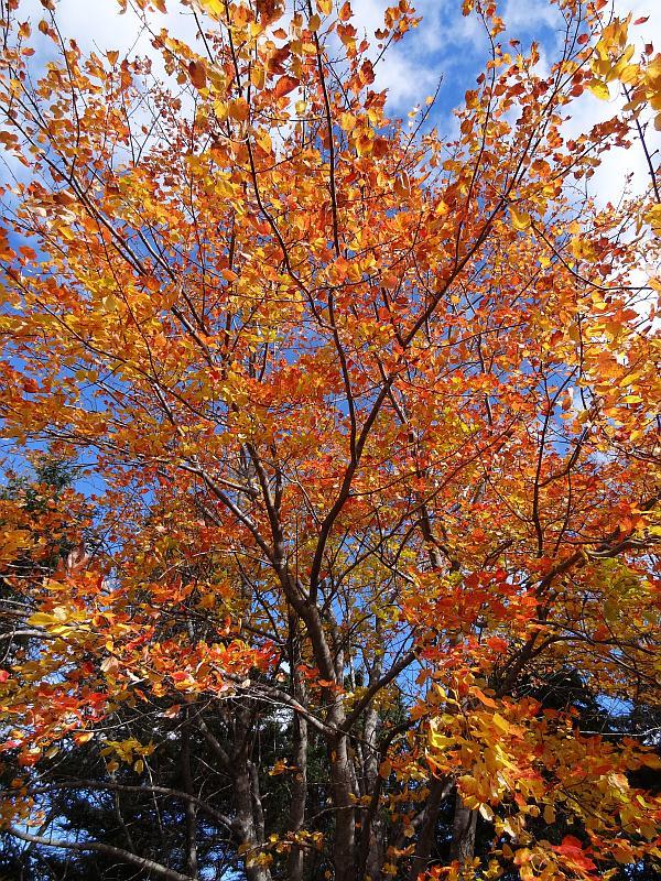Herbstlicher Baum im Kouchibouguac-Nationalpark