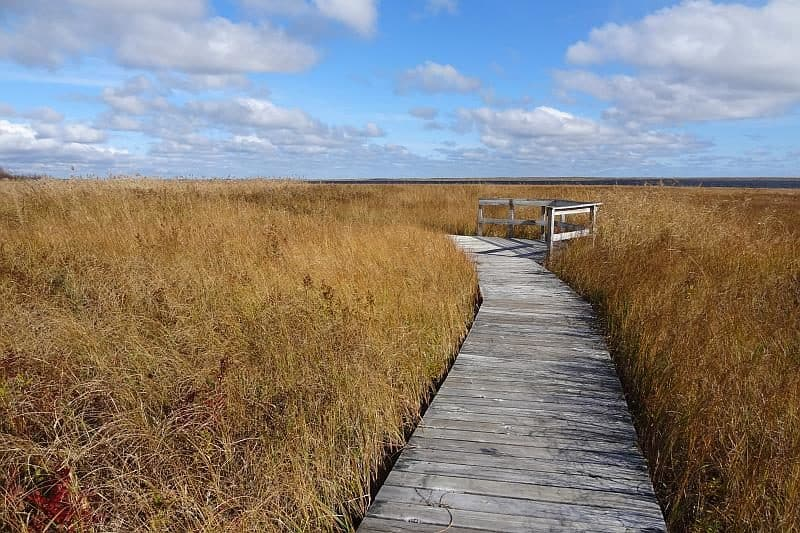 Holzsteg durch die Salzmarschen