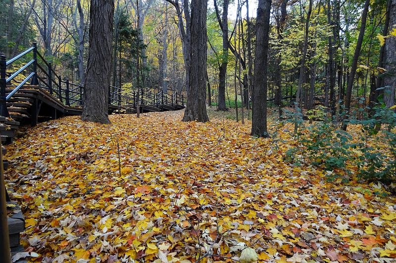 Herbstlaub Mont Royal, Montreal