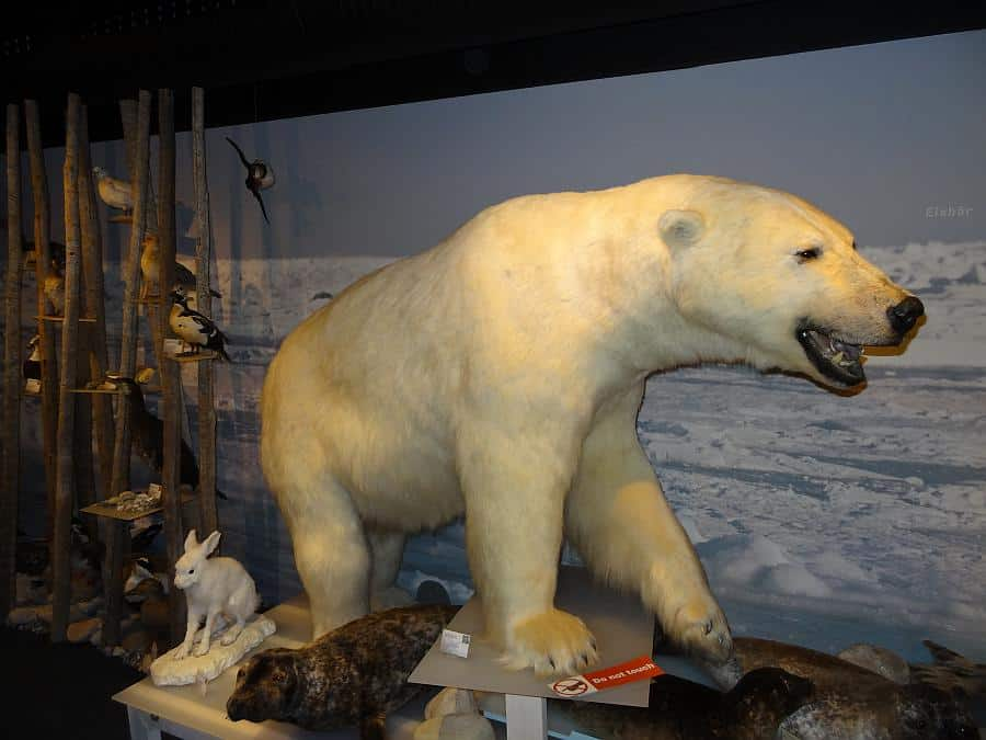 Hammerfest - Eisbärenclub