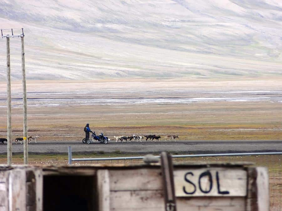Spitzbergen - Husky-Sommerschlittenfahrt