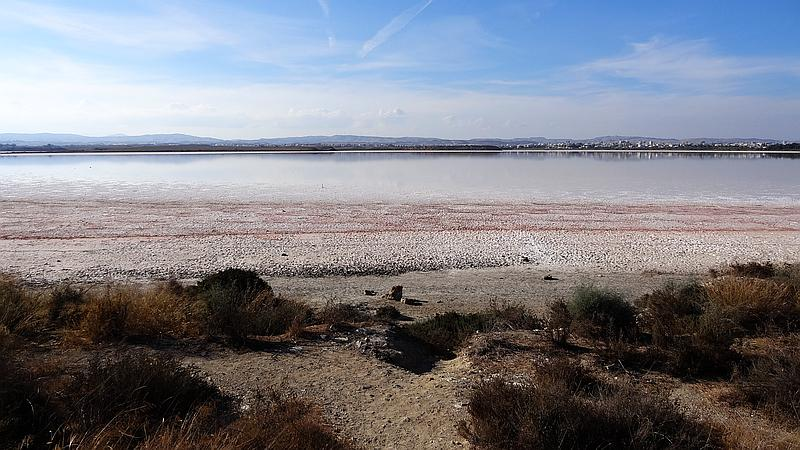 Larnaca - Salzsee