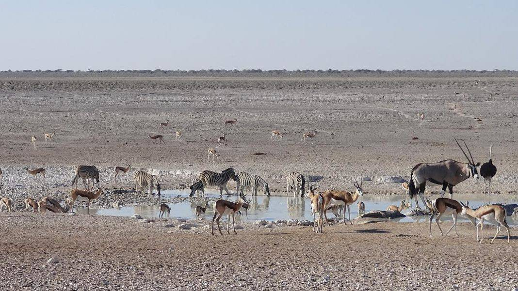 Tierwelt in Etosha
