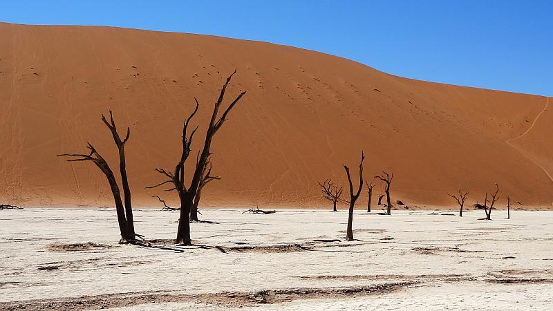 Bäume im Deadvlei