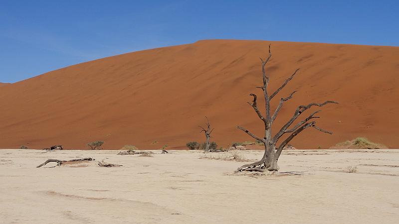 Baum im Deadvlei