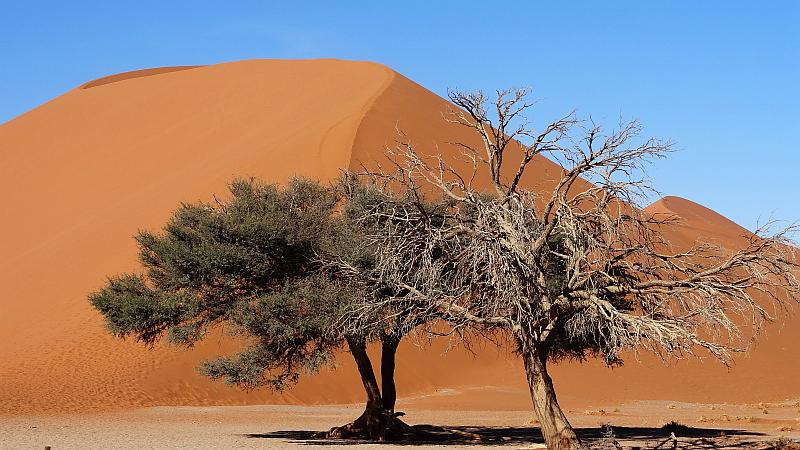 Düne 45 im Namib-Naukluft-Park