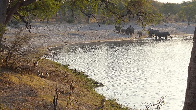 Paviane im Bwabwata-Nationalpark