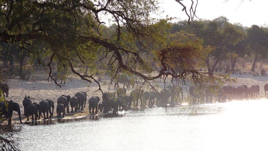 Elefantenherde in Bwabwata