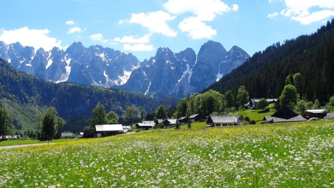 Blumenwiese Salzkammergut - Seen im Salzkammergut