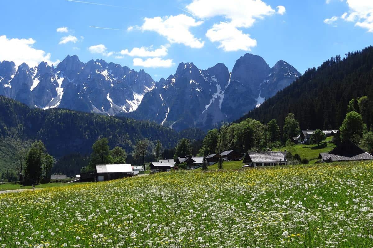Blumenwiese im Salzkammergut