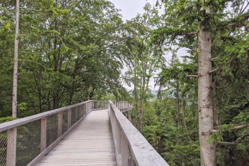 Holzsteg durch die Baumwipfel auf dem Grünberg