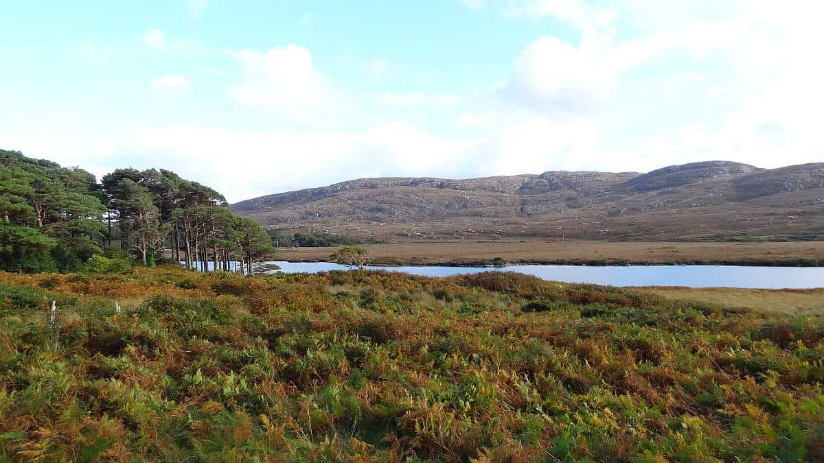Farne am Seeufer im Glenveagh National Park