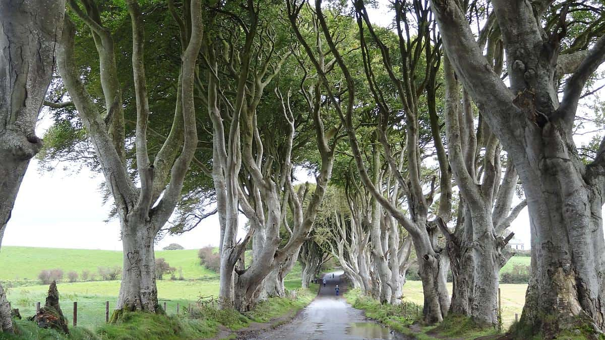 Dark Hedges, Nordirland