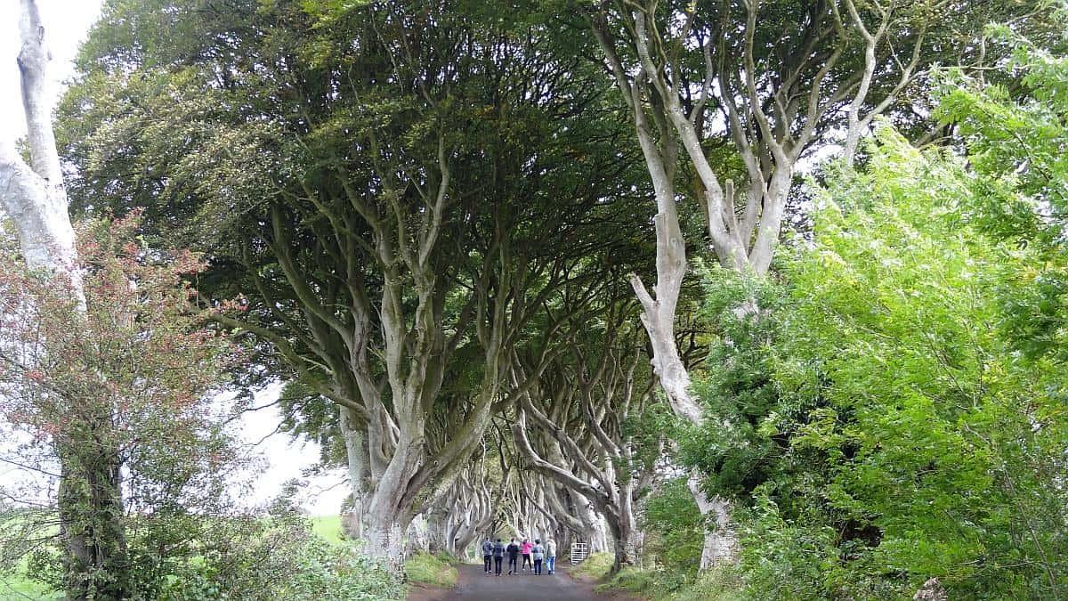 Dark Hedges Baumkronen, Nordirland