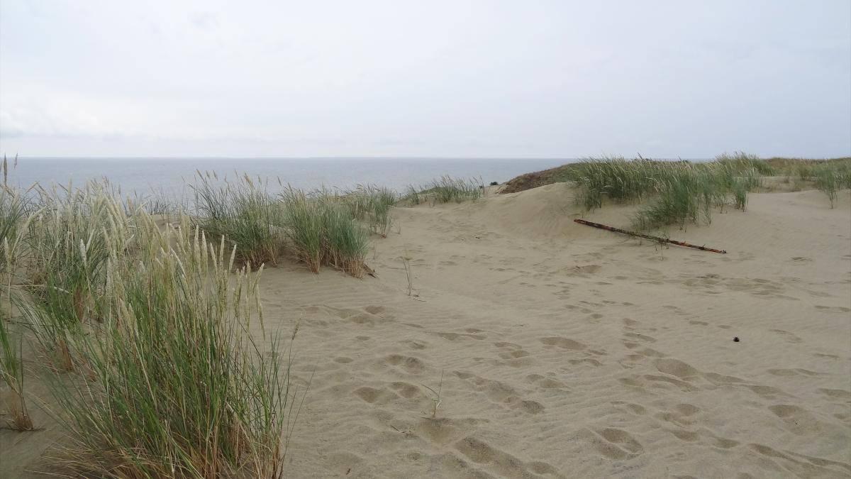 Aussicht Hohe Düne
