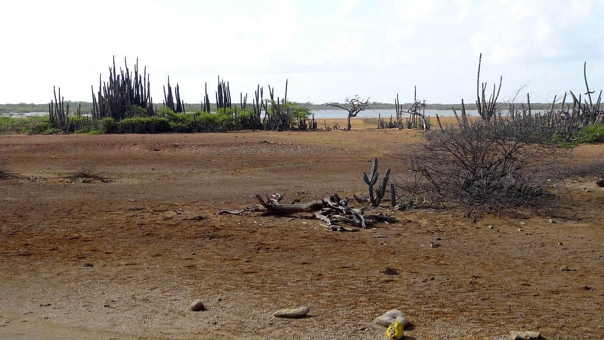 Hinterland, Bonaire