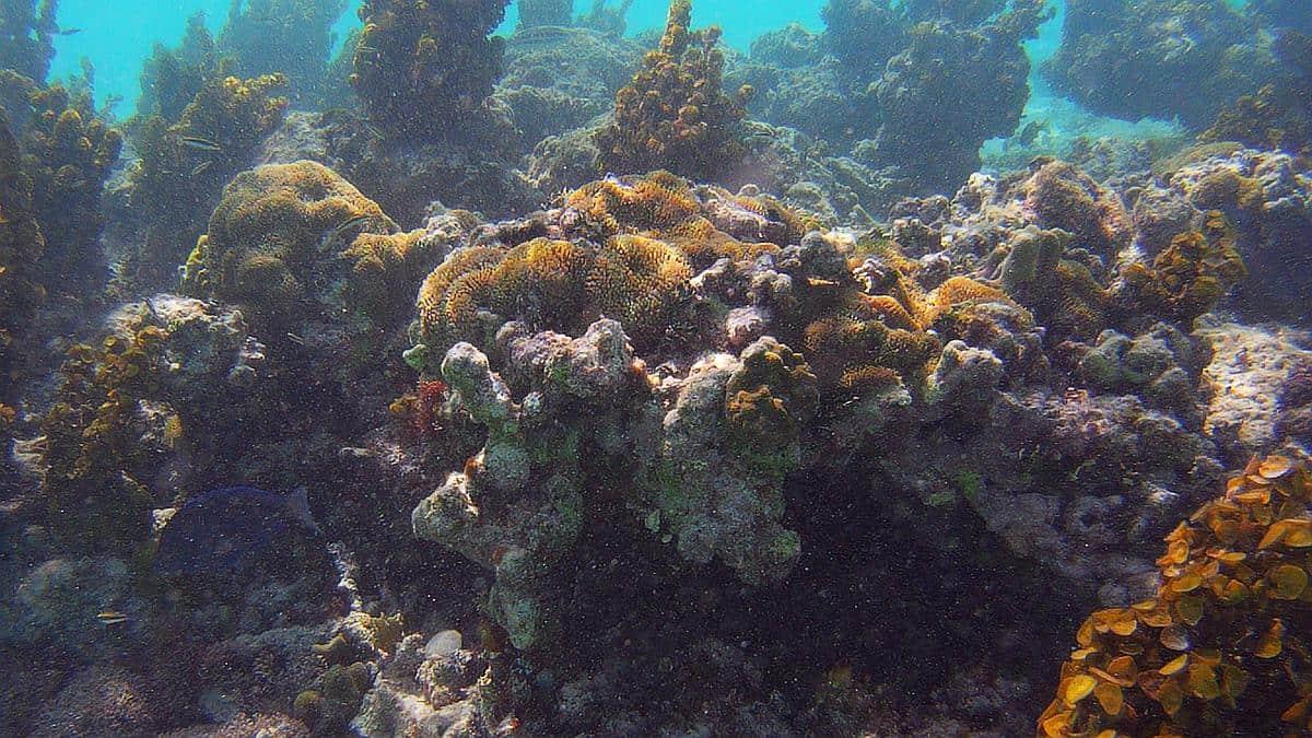 Korallen Isla Saona, Dominikanische Republik