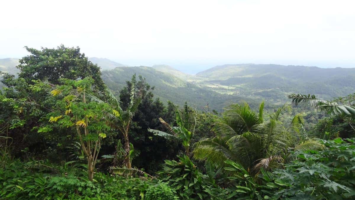 Blick über St. Lucia