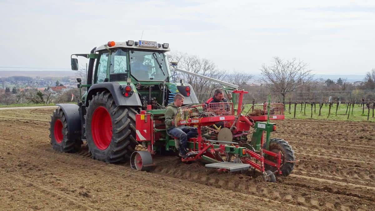 Auspflanzung Weinreben Purbach
