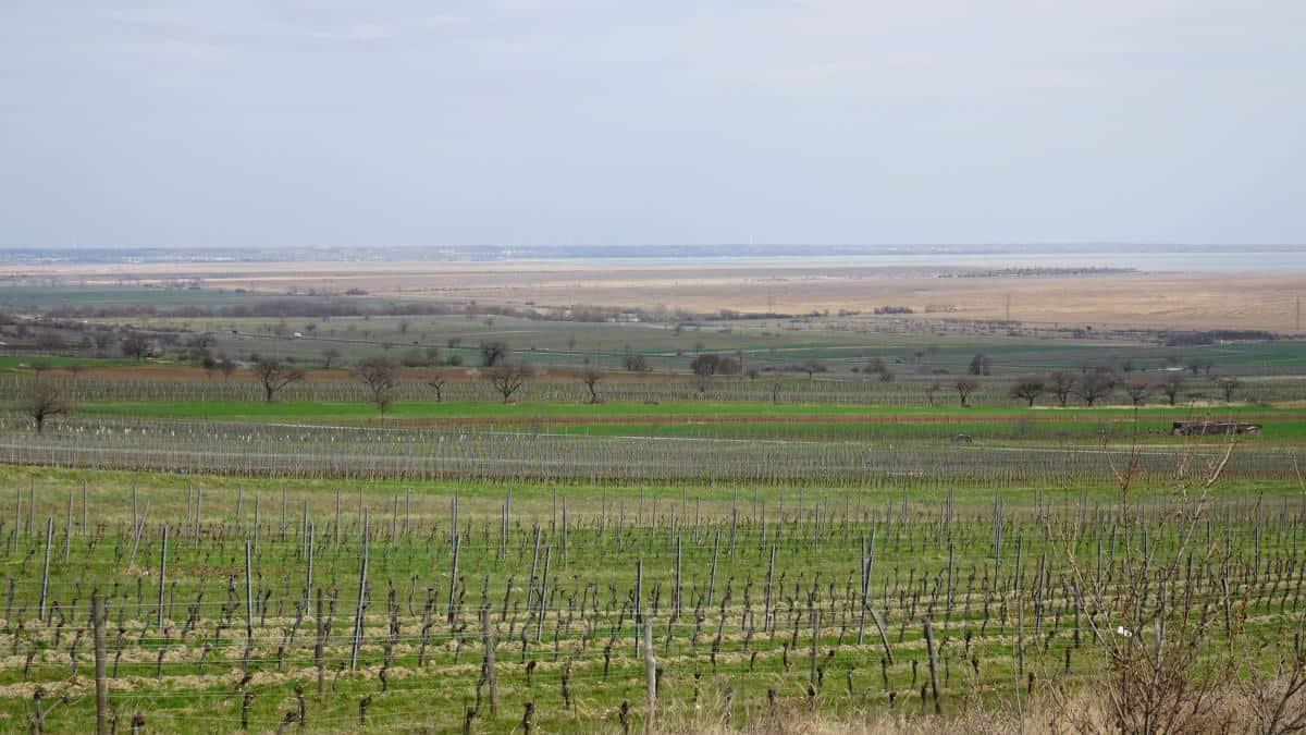 Aussicht Weinstockwanderung Purbach