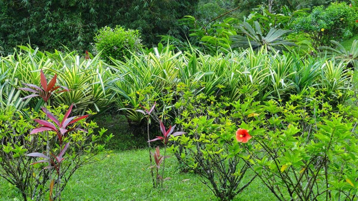 Pflanzen im Grand-Etang-Nationalpark, Grenada