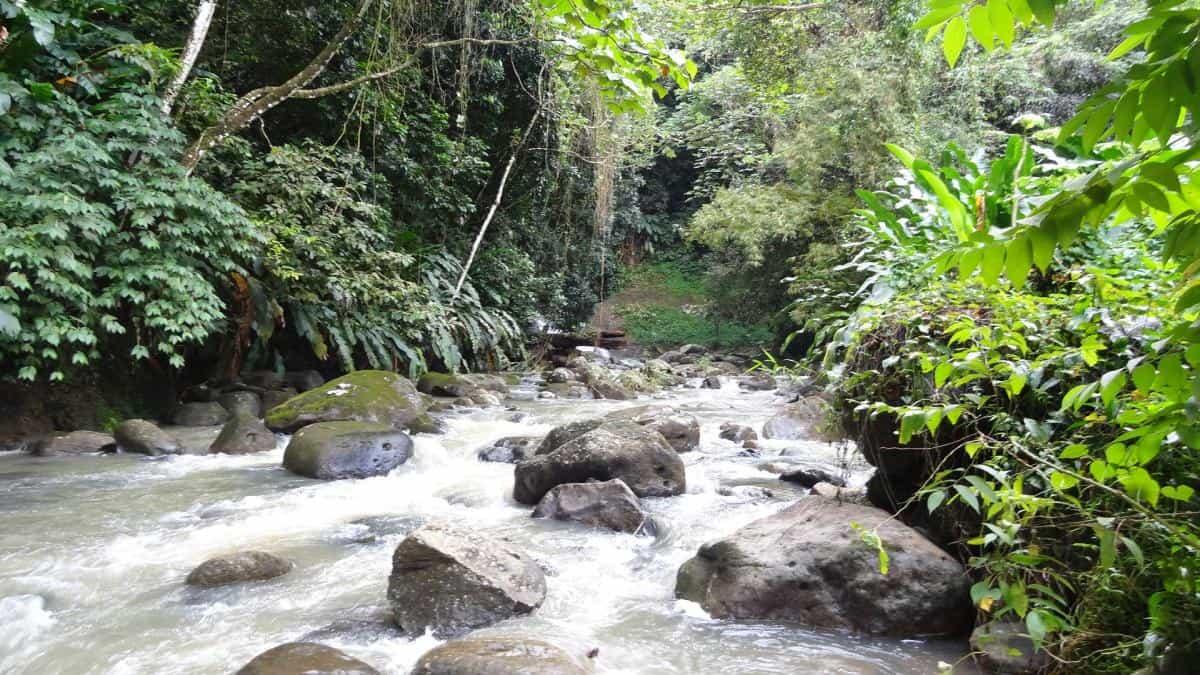 Bach, Grand-Etang-Nationalpark, Grenada