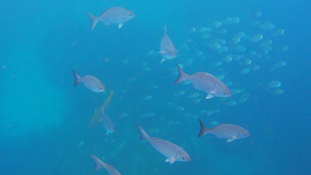 Fische, Schnorcheln, Unterwasserskulpturenpark, Grenada