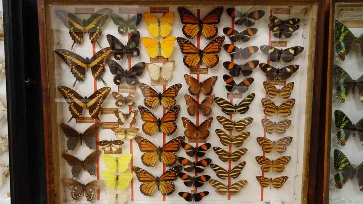 Schmetterlinge im Stift Admont