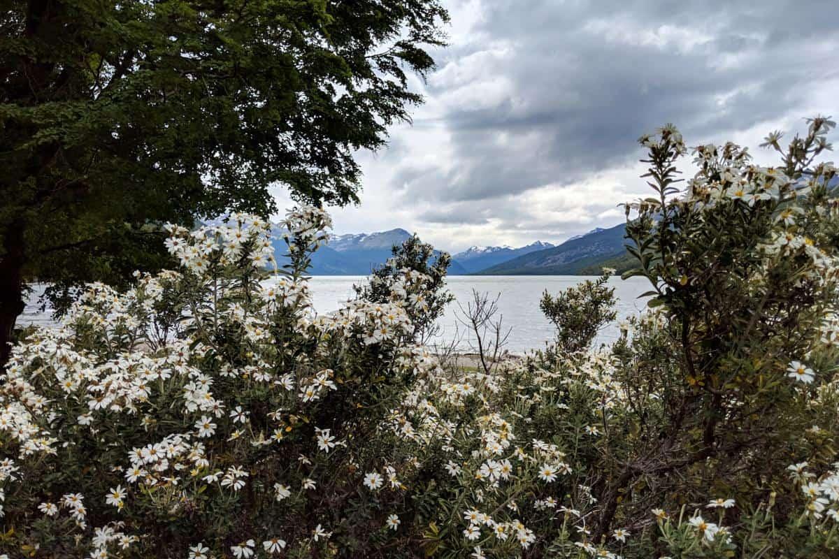 Blumen am Lago Roca in Feuerland
