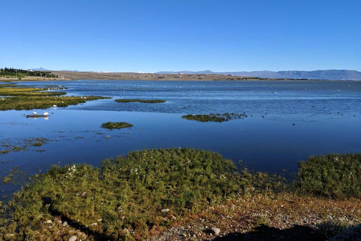 Lagune mit Vögeln in El Calafate
