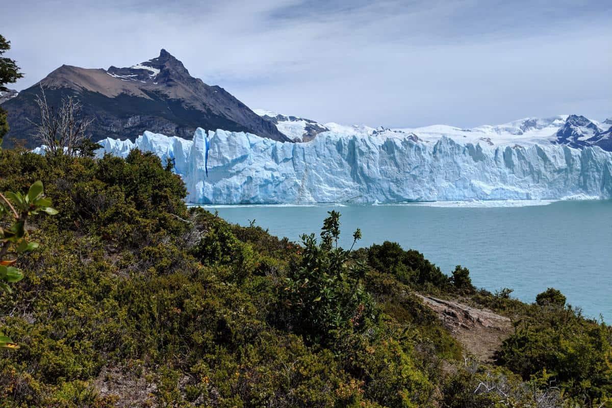 Grüne Vegetation vor dem eisigen Gletscher