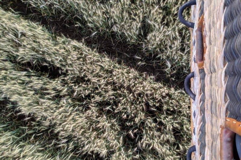 Blick auf ein Getreidefeld kurz vor der Landung