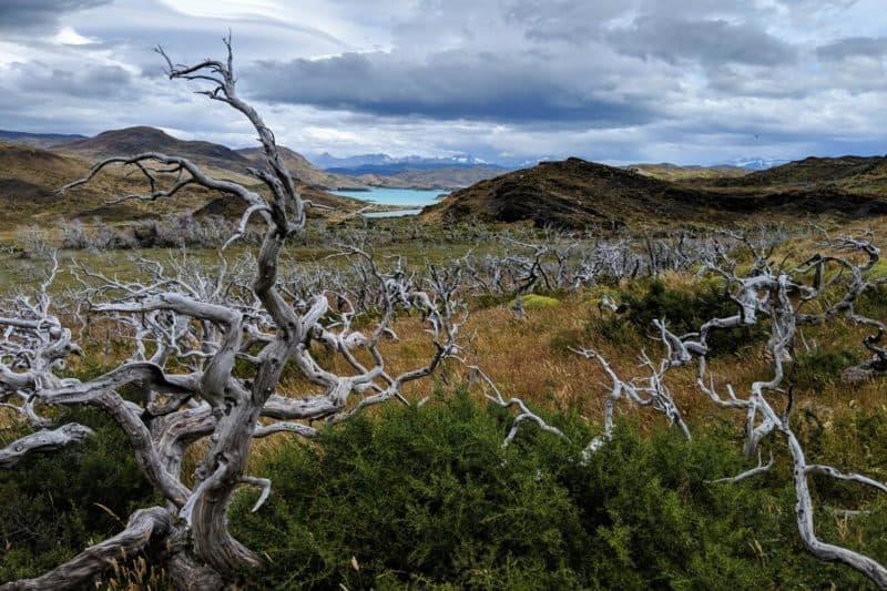 Verbrannte Bäume im Torres-del-Paine-Nationalpark