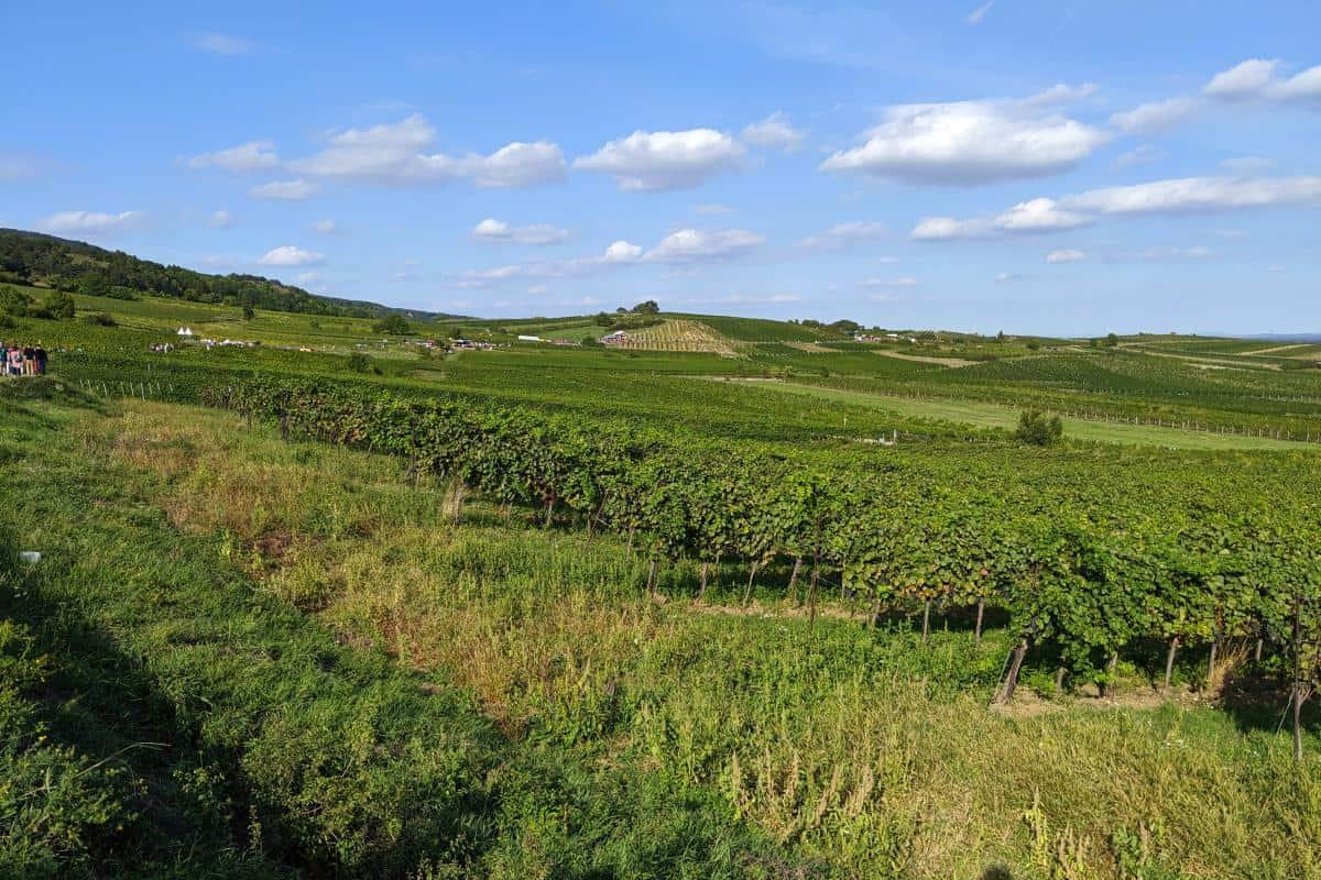 Blick auf die Genussmeile Baden und die Weinberge