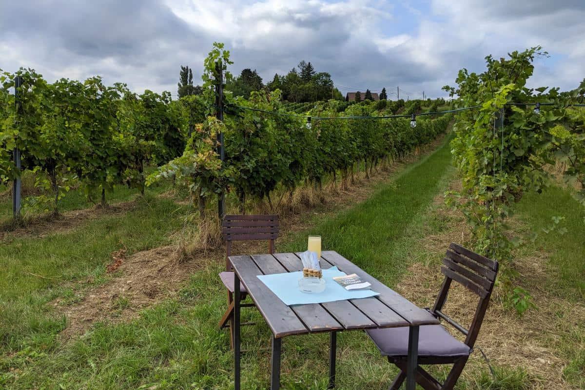 Holztisch in den Weinbergen auf der Genussmeile Baden