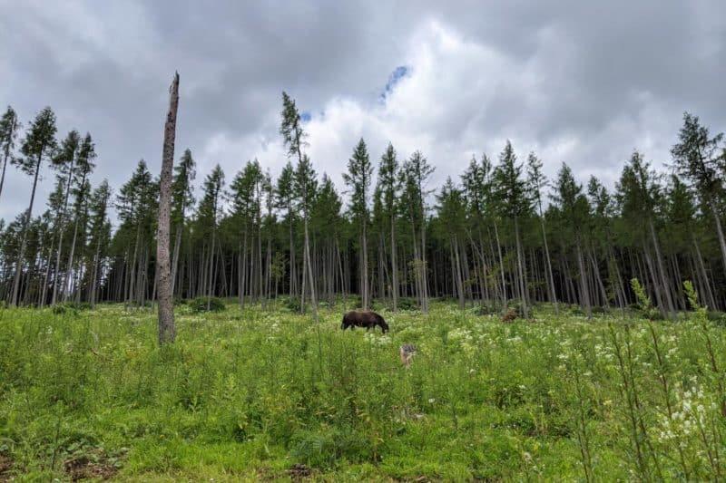 Pferde in einer Blumenwiese am Gerlerkogel