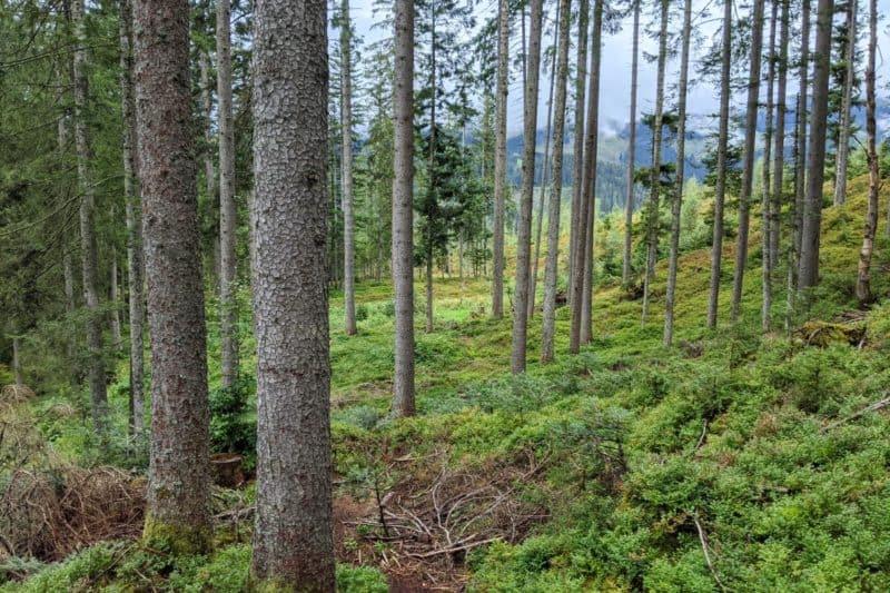 Waldlandschaft auf dem Natrun