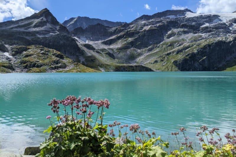 Blumen vor einem Gletschersee mit Bergpanorama im Hintergrund